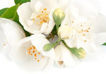 Jasmintee, Aromatisierter Tee, Jasminblüten Tee