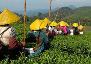 china, chinesisches zitat, teezitat, chinesischer Tee, chinatee, grüner tee, schwarzer tee