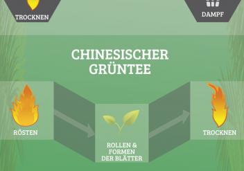 Infografik Produktion von Tee, Schwarztee, Grüntee, Oolong