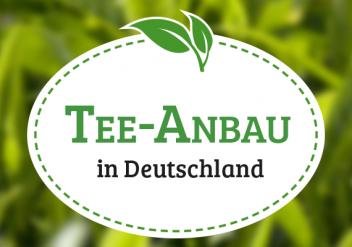 teeanbau-deutschland_blog