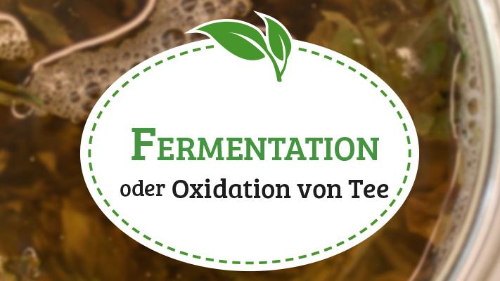 Fermentation von Tee / Oxidation von Tee