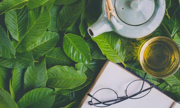 Grüner Tee schmeckt bitter: Ein Mythos geht um die Welt