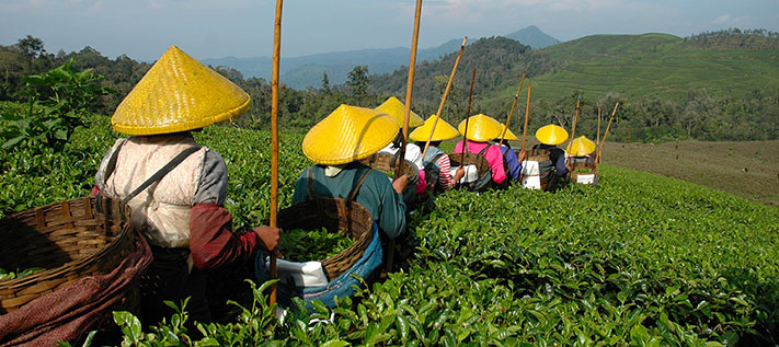 Das Teezitat des Tages von Lo Tung