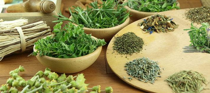 Teekräuter aus Südtirol: Teepod unterwegs auf Kräuterwanderung