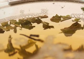 zubereitung grüntee, grüner Tee, Anleitung Grüner Tee
