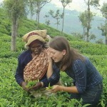 SriLanka Teapicker