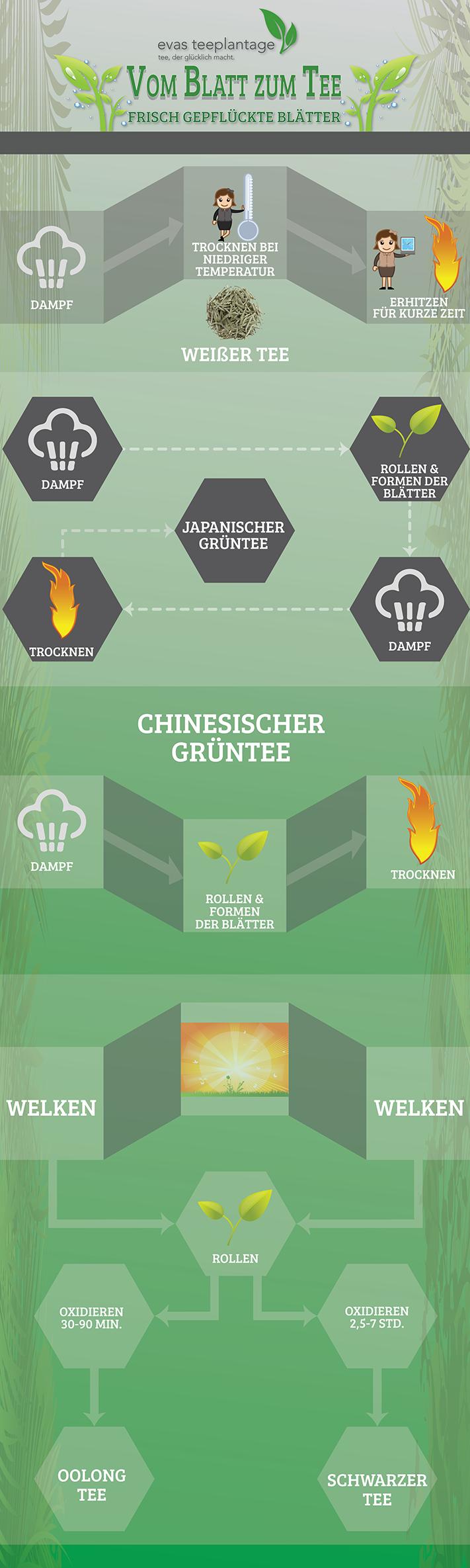 Infografik zur Produktion von Grünem Tee in China und Japan, Oolong Tee, Weißen Tee, Schwarzen Tee
