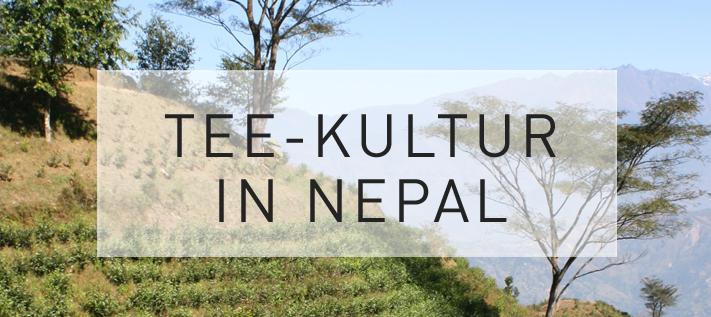Teekultur in Nepal