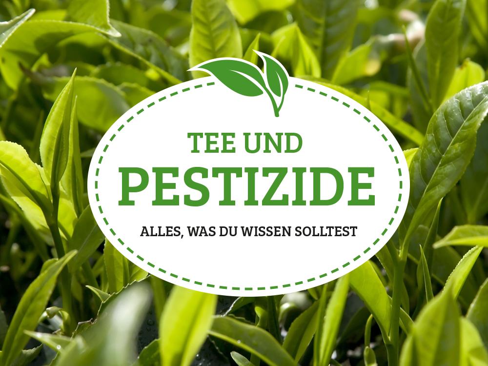 Tee und Pestizide: Das müssen Teetrinker wissen