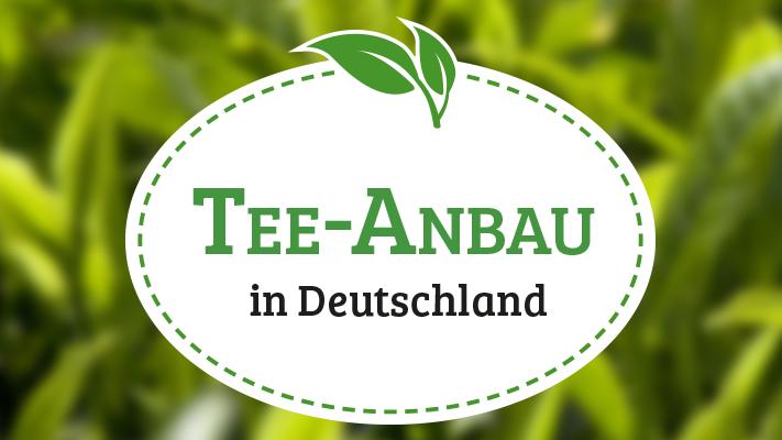 Teeanbau in Deutschland?