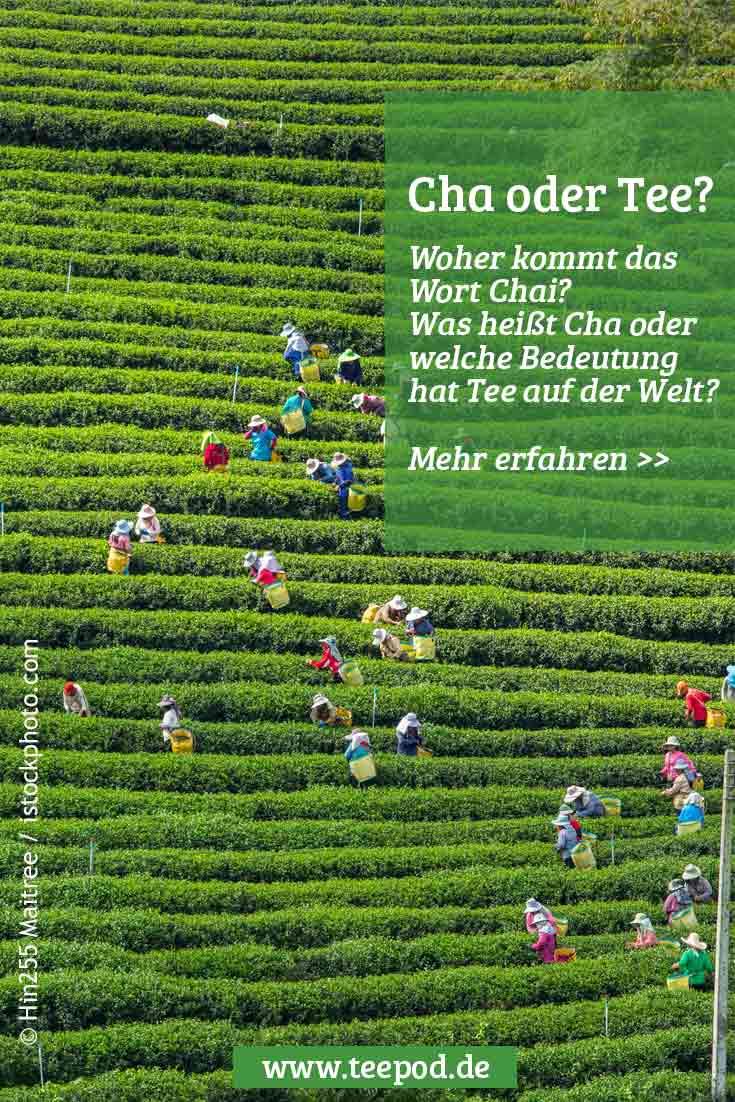 Cha oder Tee - über die Bedeutung eines der schönsten Getränke der Welt