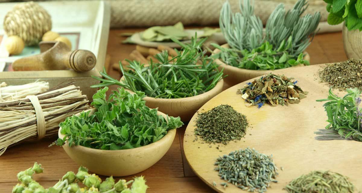 Sind Pyrrolizidinalkaloide Tee- und Kräuterbestandteile die krank machen?