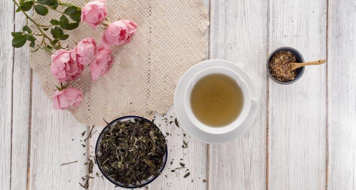 Weißer Tee: Alles was Teetrinker darüber wissen sollten