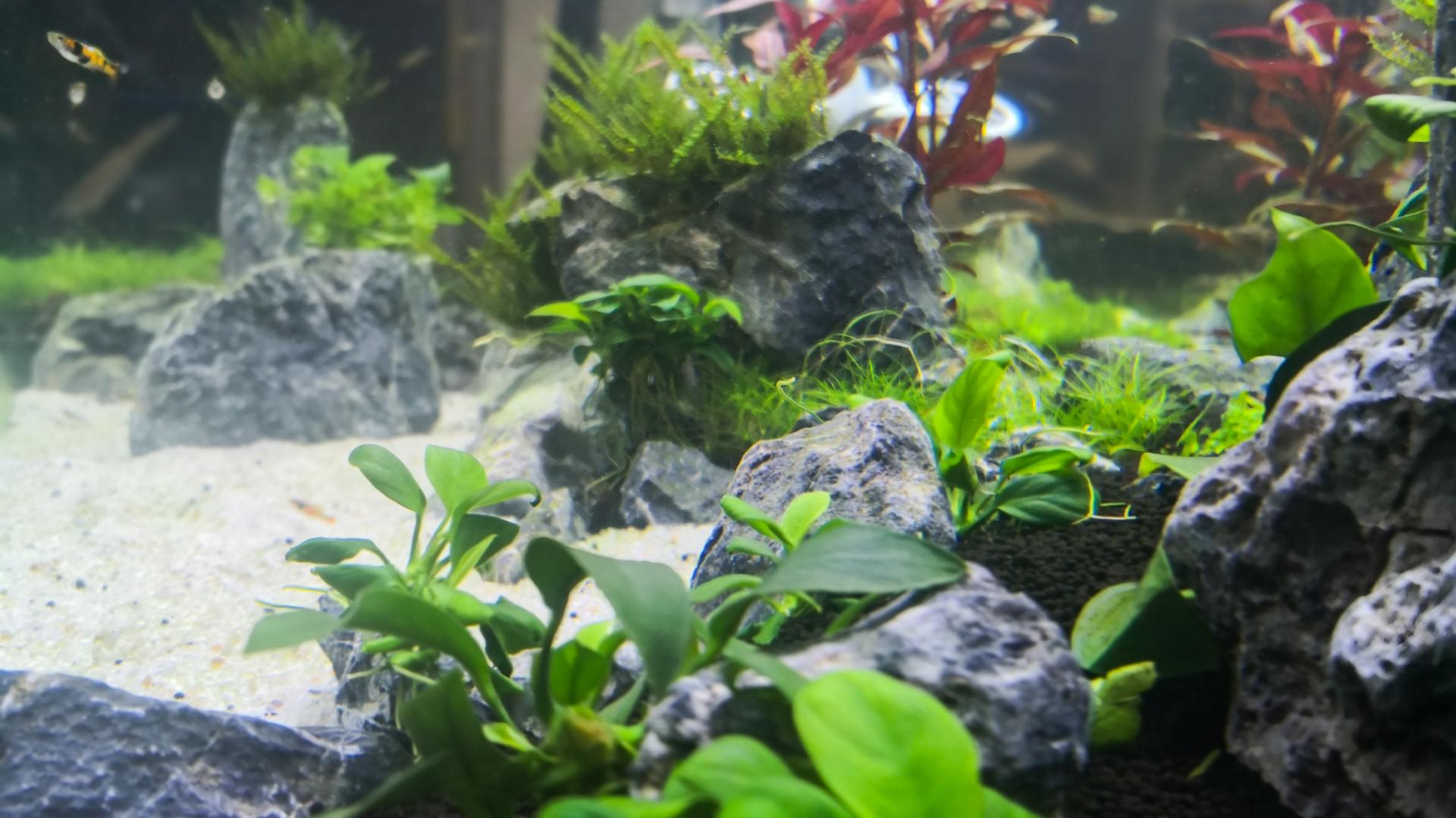 Aquarium von Tobias Amann